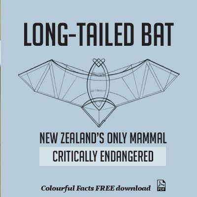 WuHoo Colourful Fact Sheets LongTailedBat 190903 P2