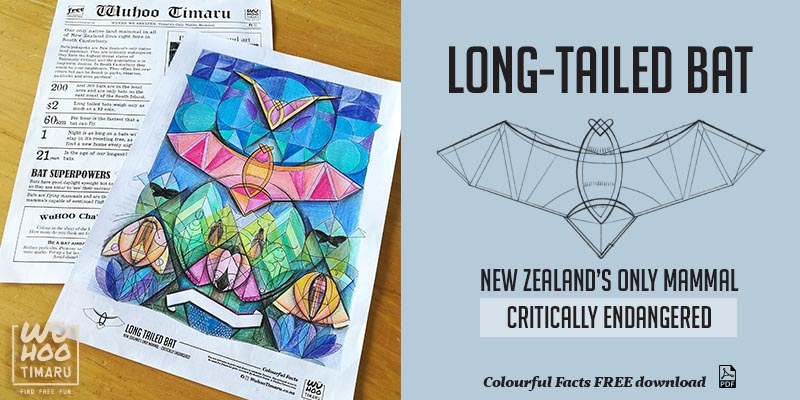 WuHoo Colourful Fact Sheets LongTailedBat 190903