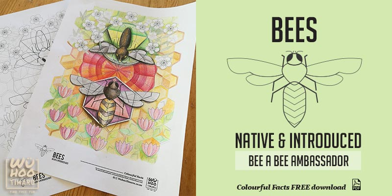 WuHoo Colourful Fact Sheets Native Introduced Bees 191002