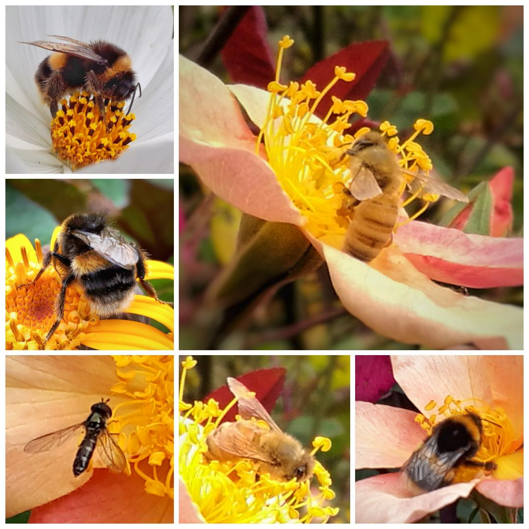 Spy pollinators that buzz